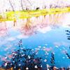 恋する桜の季節のサムネイル画像